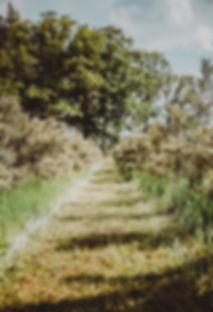 Zelt-smiltserksku-darzs.jpg