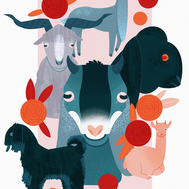 Non-fiction children's book about breeds of goats.