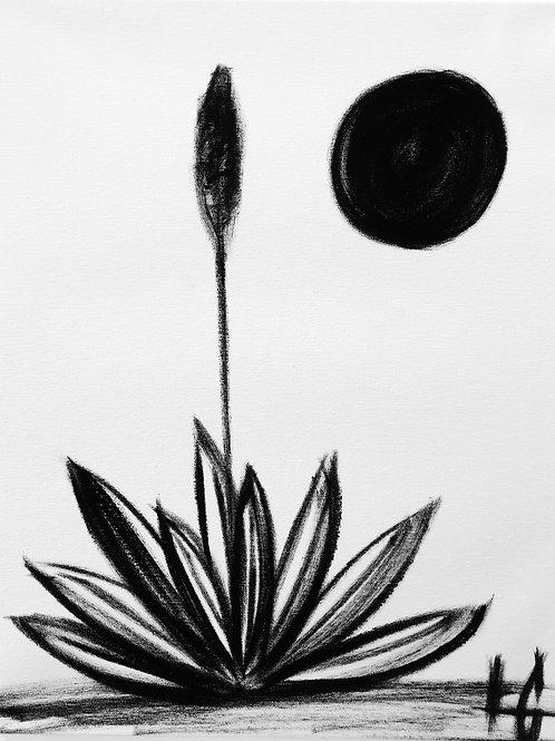 Cactus 22