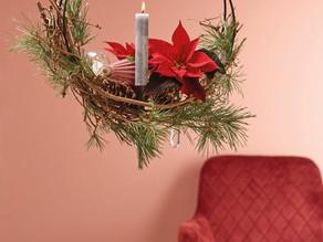 Ponsettias take to the skies this Christmas