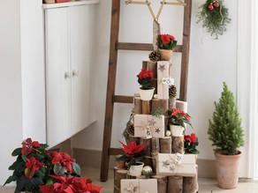 DIY-Idee: Adventskalender-Weihnachtsbaum