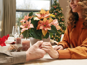 Poinsettia growers reveal secrets to beautiful coloured bracts in time for Christmas