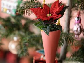 Weihnachtssternschmuck für den Christbaum