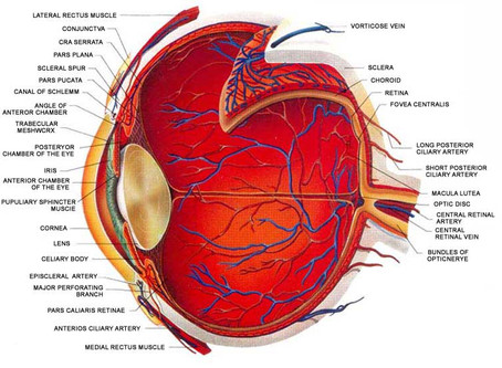 Eye Care Middle Man