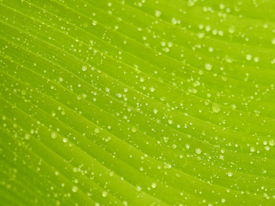 Canva - Close-Up Photo of Leaf With Drop