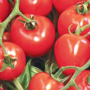 Old Fashioned Tomato Relish