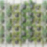 LN_DSass%C3%A1_01_edited.jpg