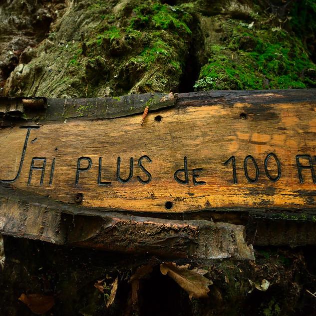 La Forêt Magique de Taussac