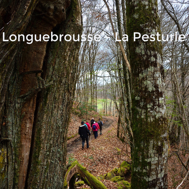 Longuebrousse - La Pesturie