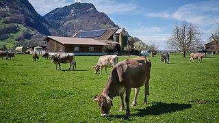 Campin a la ferme suisse