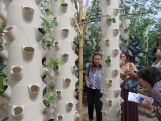 Carrefour na França se lança na agricultura urbana: horta no estacionamento