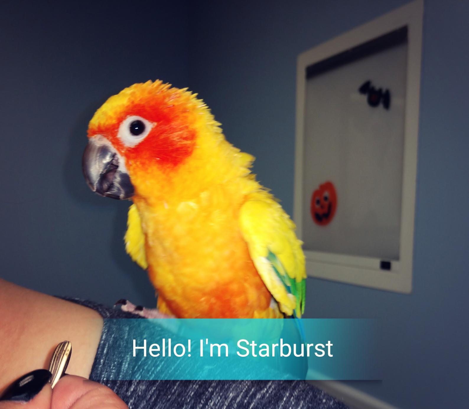 Starburst_Bird