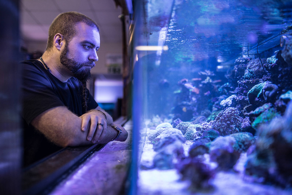 Man looking into fish tank - Havelock Photography, brand imagery and business photography.