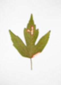 25.10.2017 (2), 2018, Natural Leaves, Resin