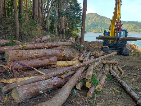 伐採した木材は…