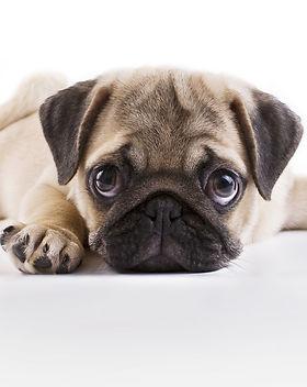 Hundehalterhaft.jpg