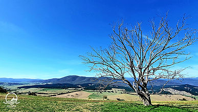 Snowy Valleys NSW LR.jpg