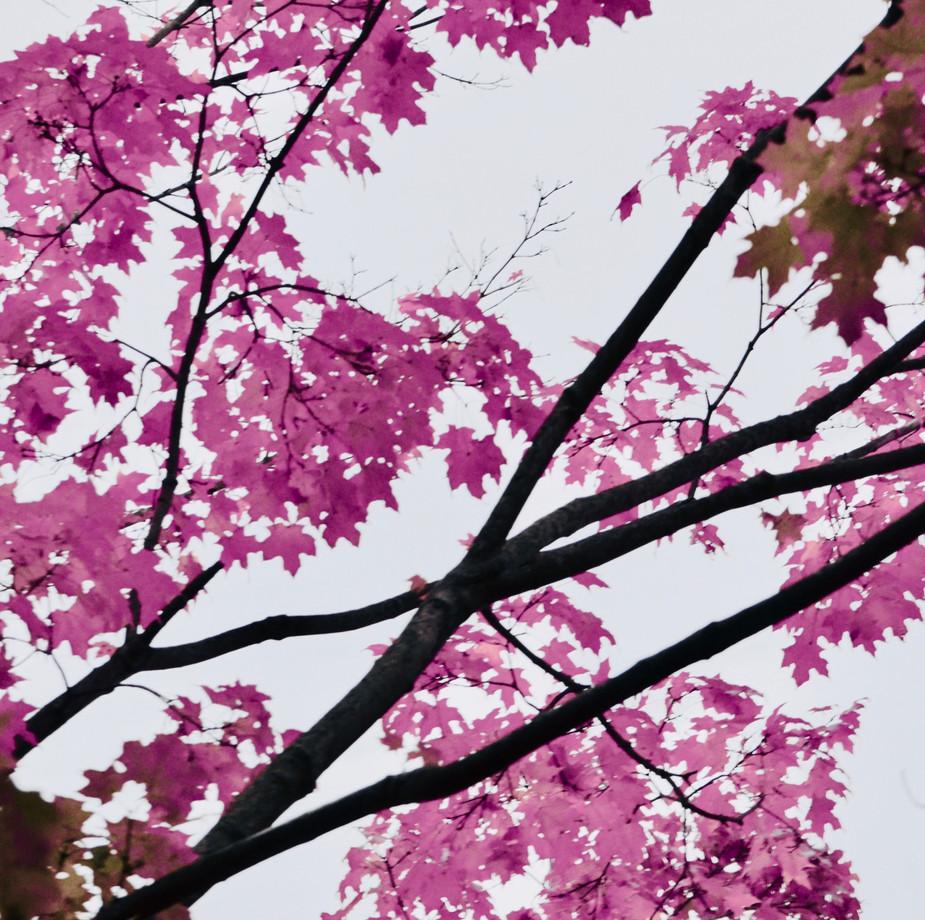 """Pink Paradise"""