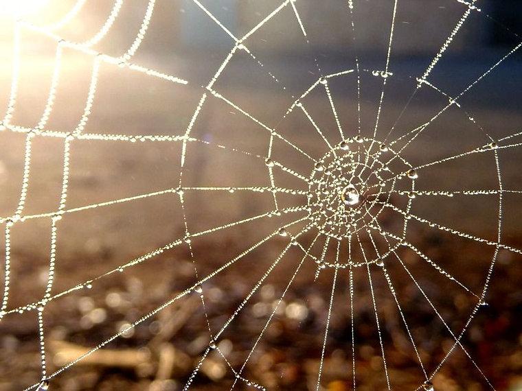Lit spider web.jpg