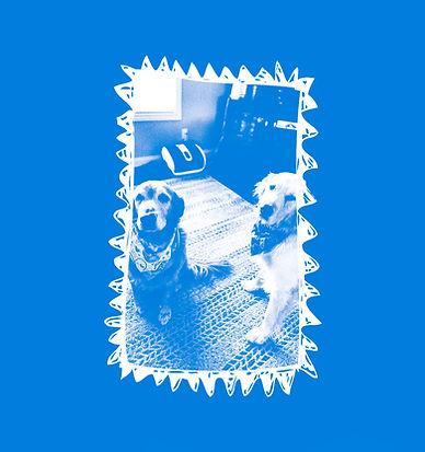 WD-bluetemplate-Tailstimonials-JenniferL