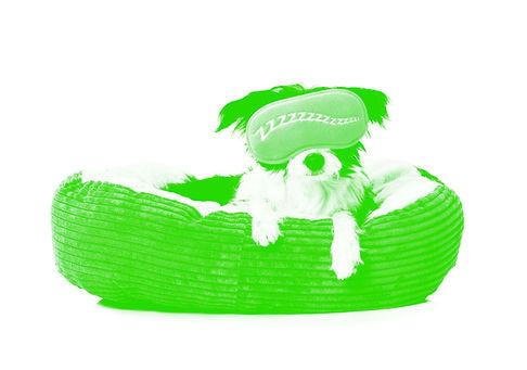 WD-greentemplate-Services-Sleepover.jpg