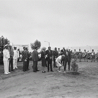 First Lady Pat Nixon plants a tree.