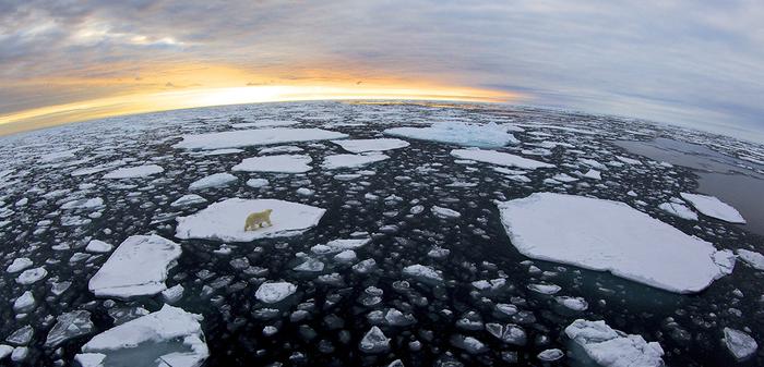 068 - Polar Bear on Ice -  By Jayanth Sharma.png