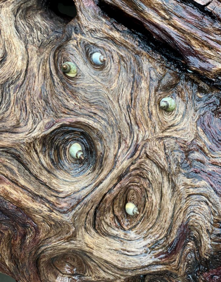 44 - Cockles on Log - By Yael Elfassy.pn