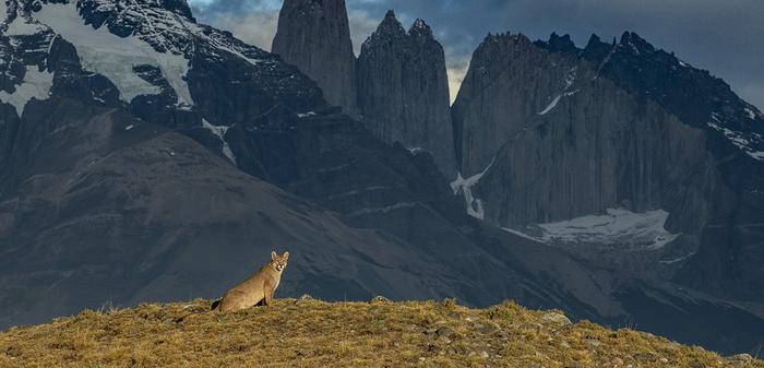 068 - Puma Patagonia - By Jayanth Sharma.png