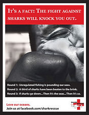 Shark Rescue Poster