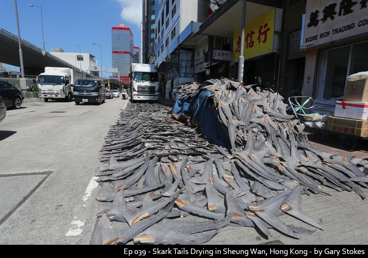 Ep 039 - Skark Tails Drying in Sheung Wa