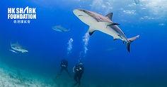 Hong Kong Shark Foundation.jpg