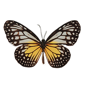 yellowbutterfly, transformation, naturopathy, natural health, healing