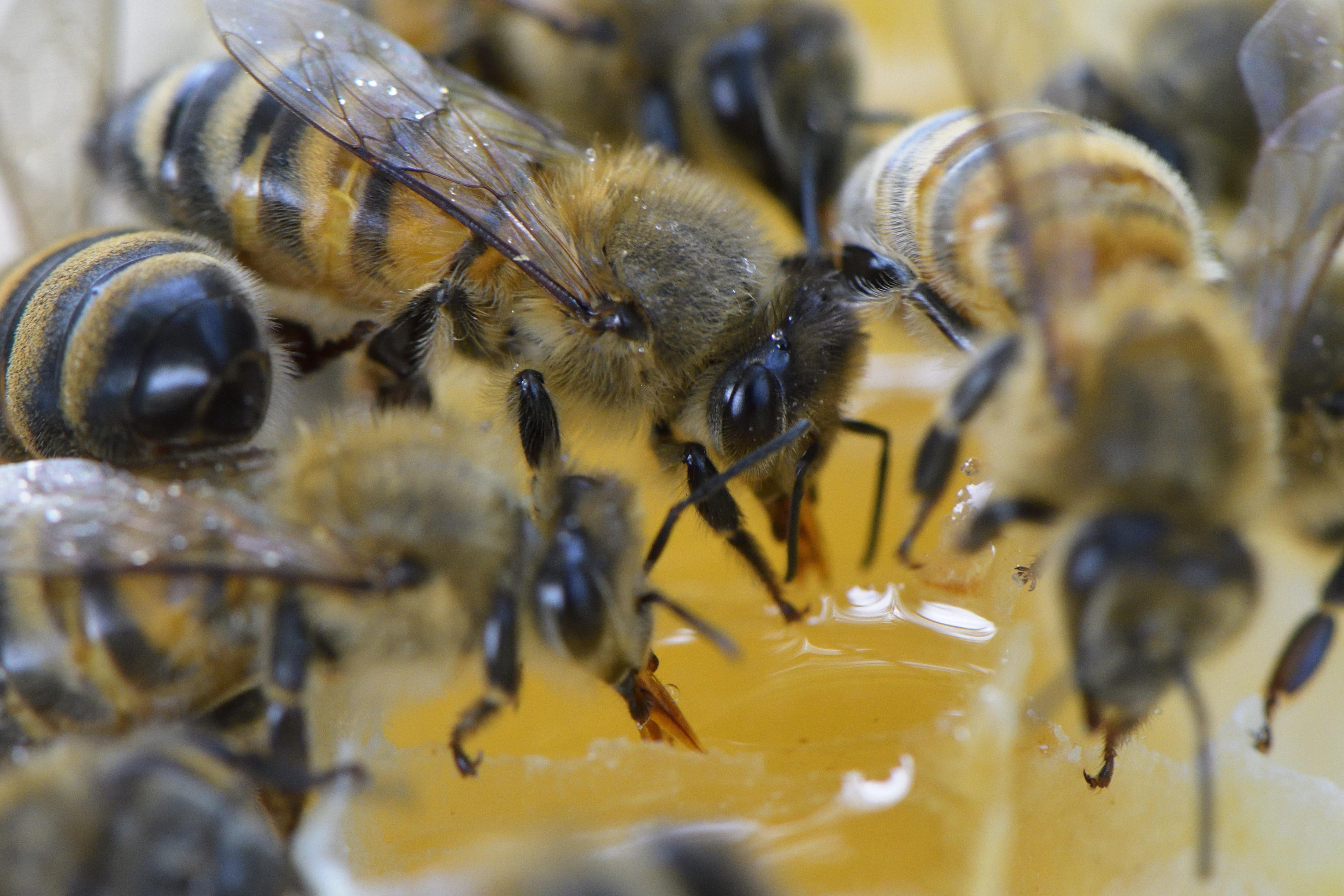 abeilles 19 vauvarin