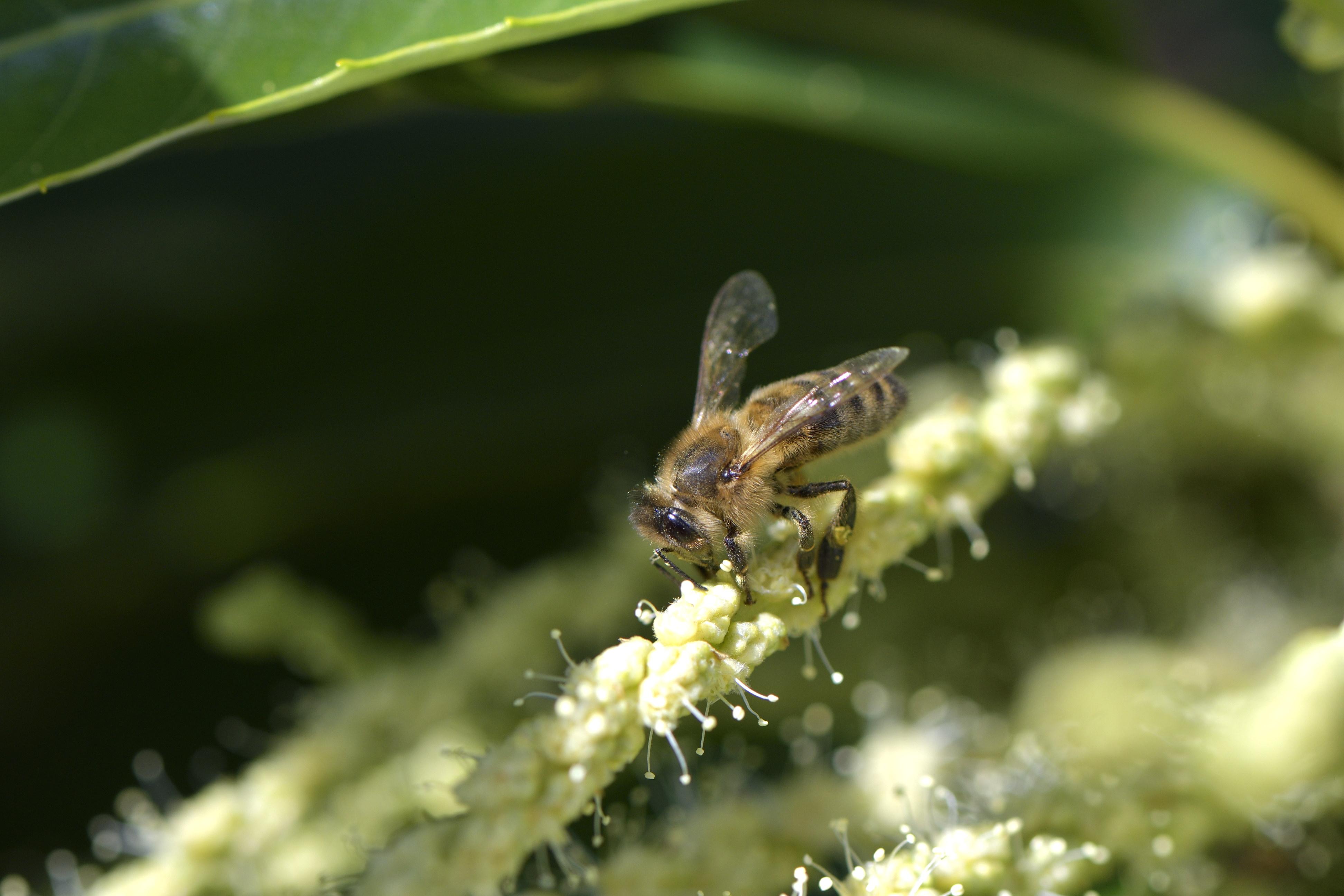 abeilles 40 vauvarin