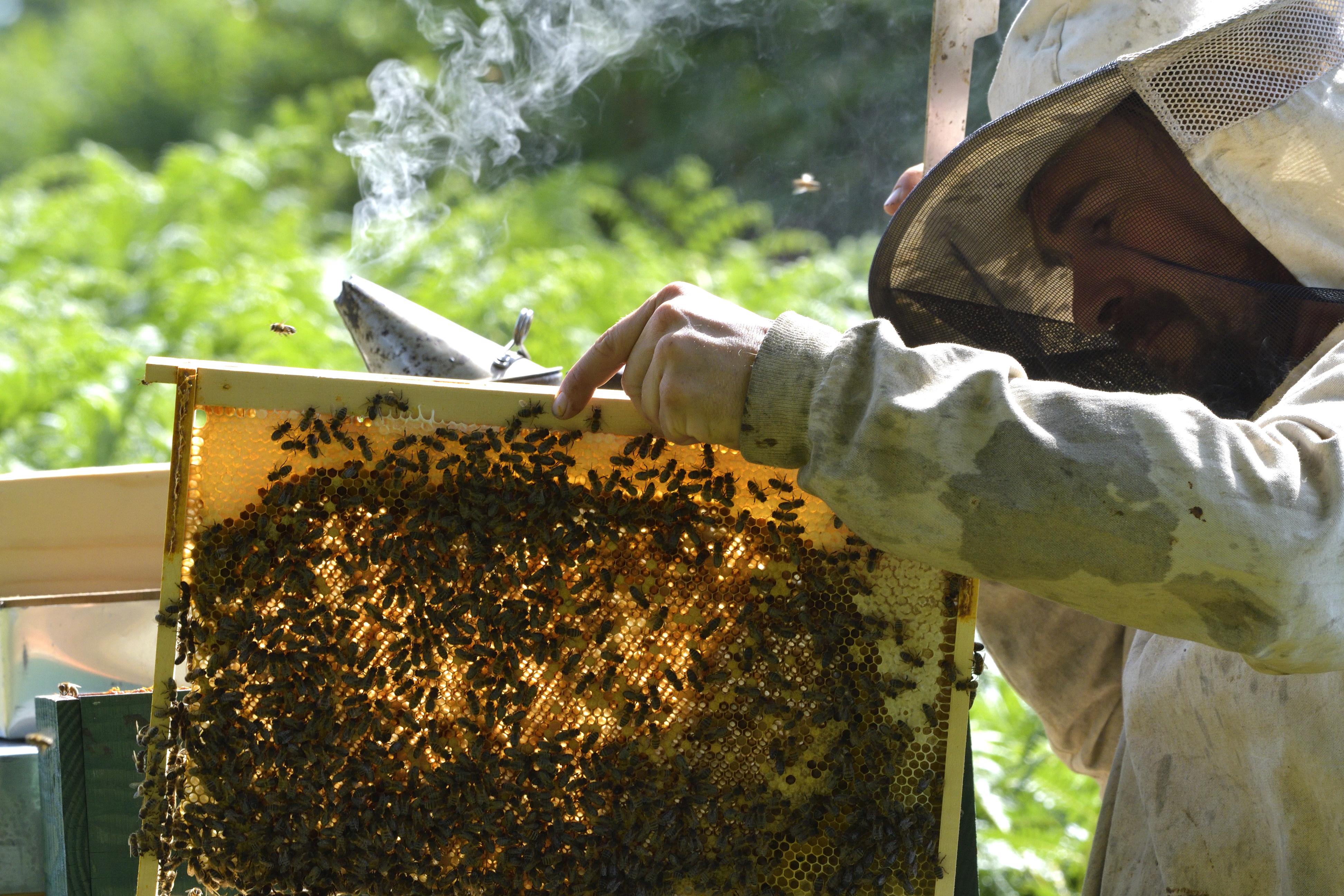 abeilles 36 vauvarin