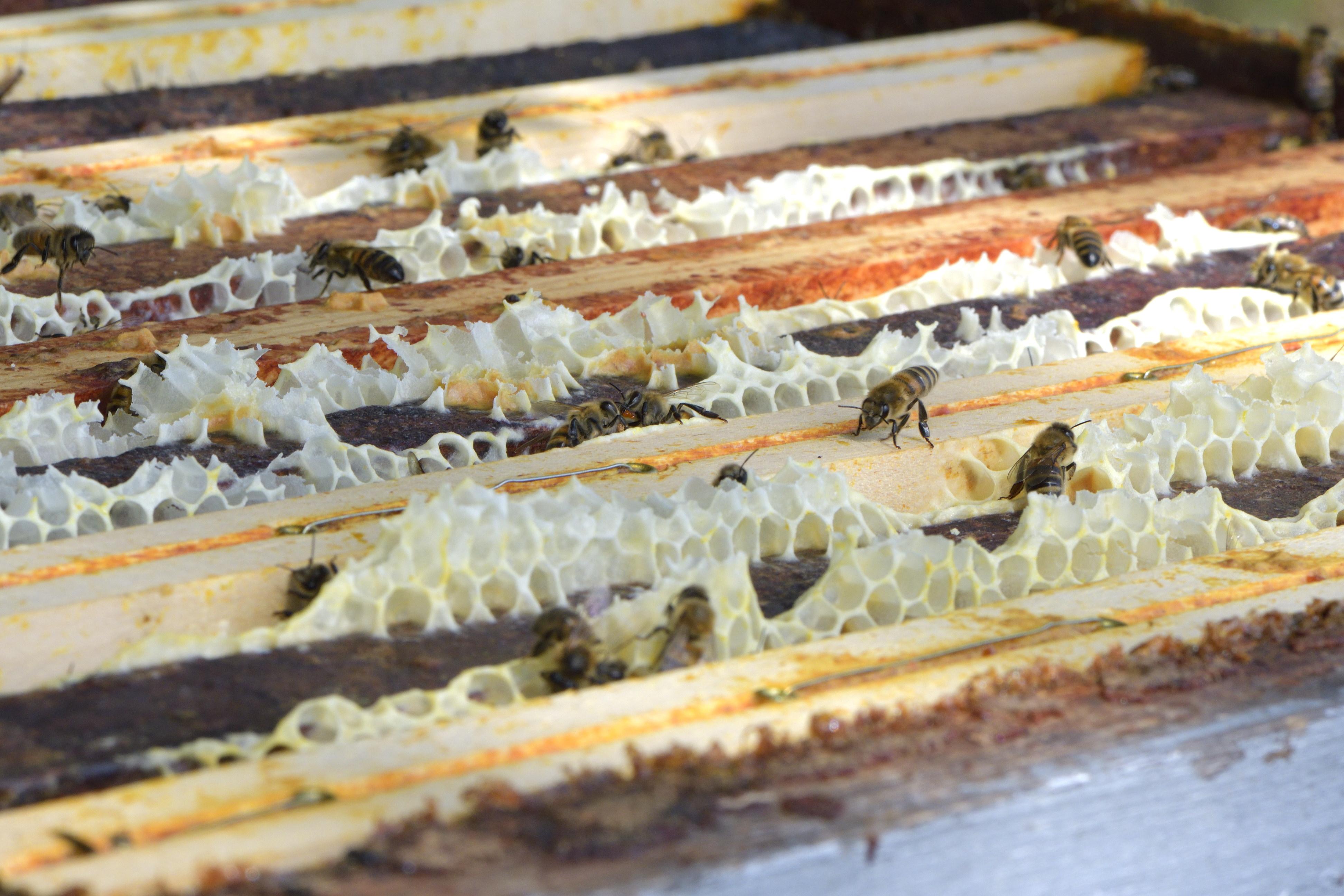abeilles 22 vauvarin