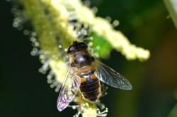 abeilles 39 vauvarin
