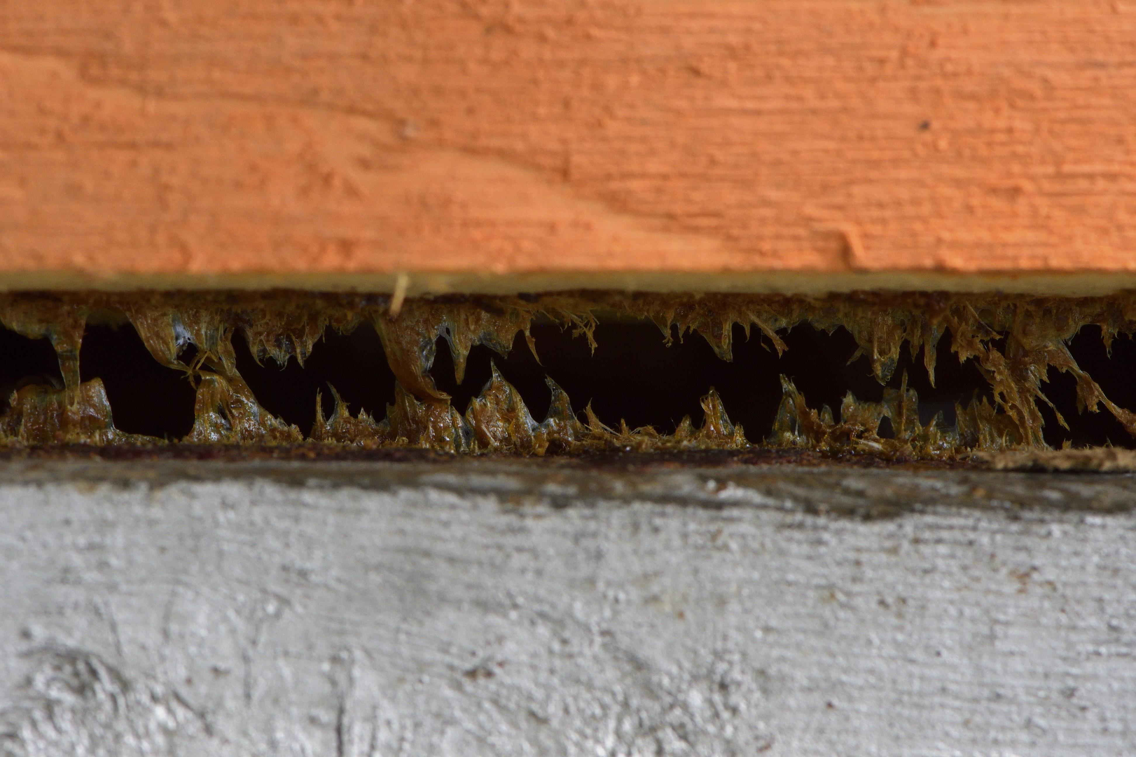 abeilles 21 vauvarin