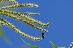 abeilles 38 vauvarin