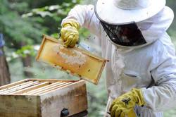 apiculteur_65760480