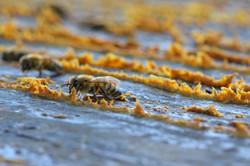 abeilles 26 vauvarin