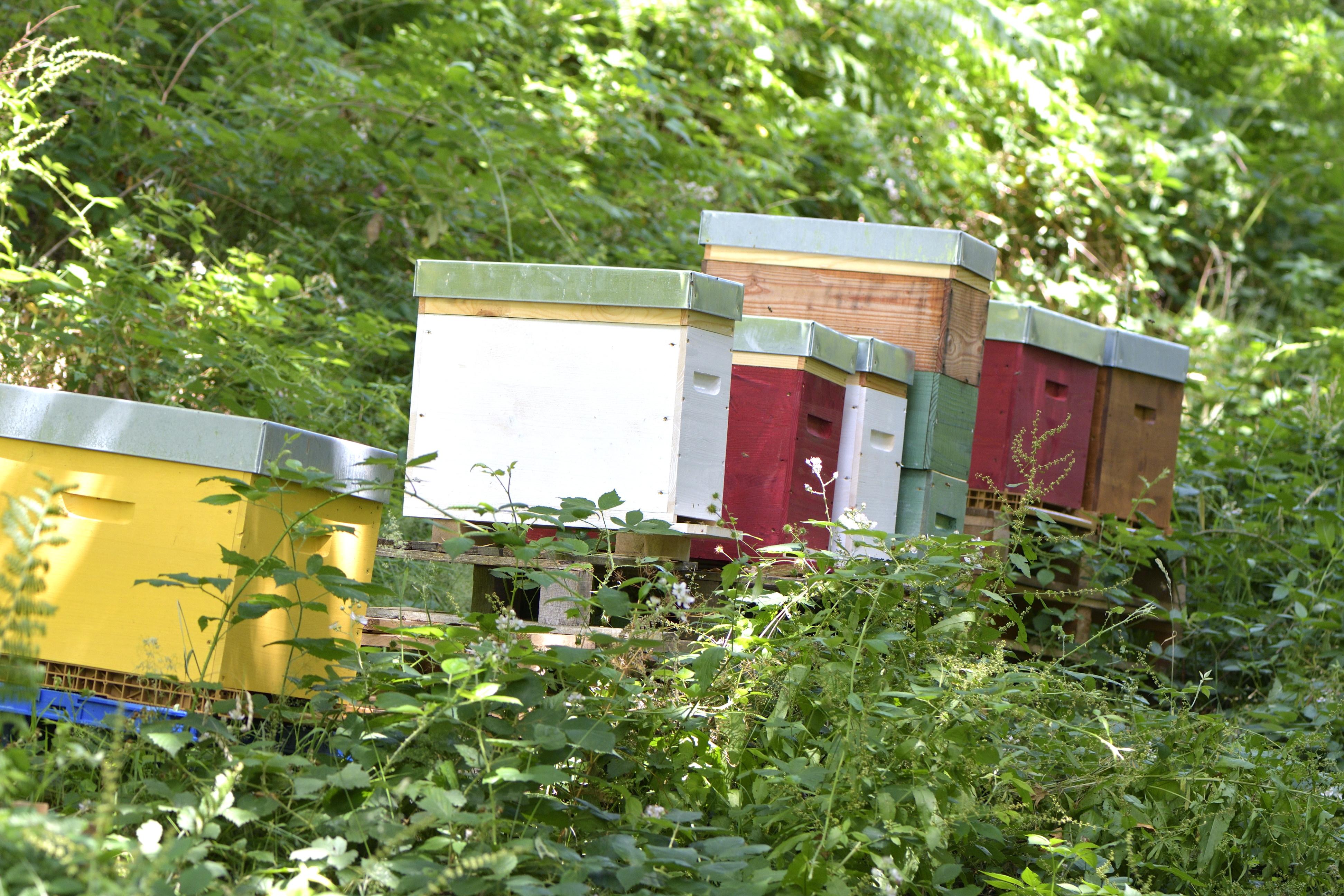 abeilles 10 vauvarin