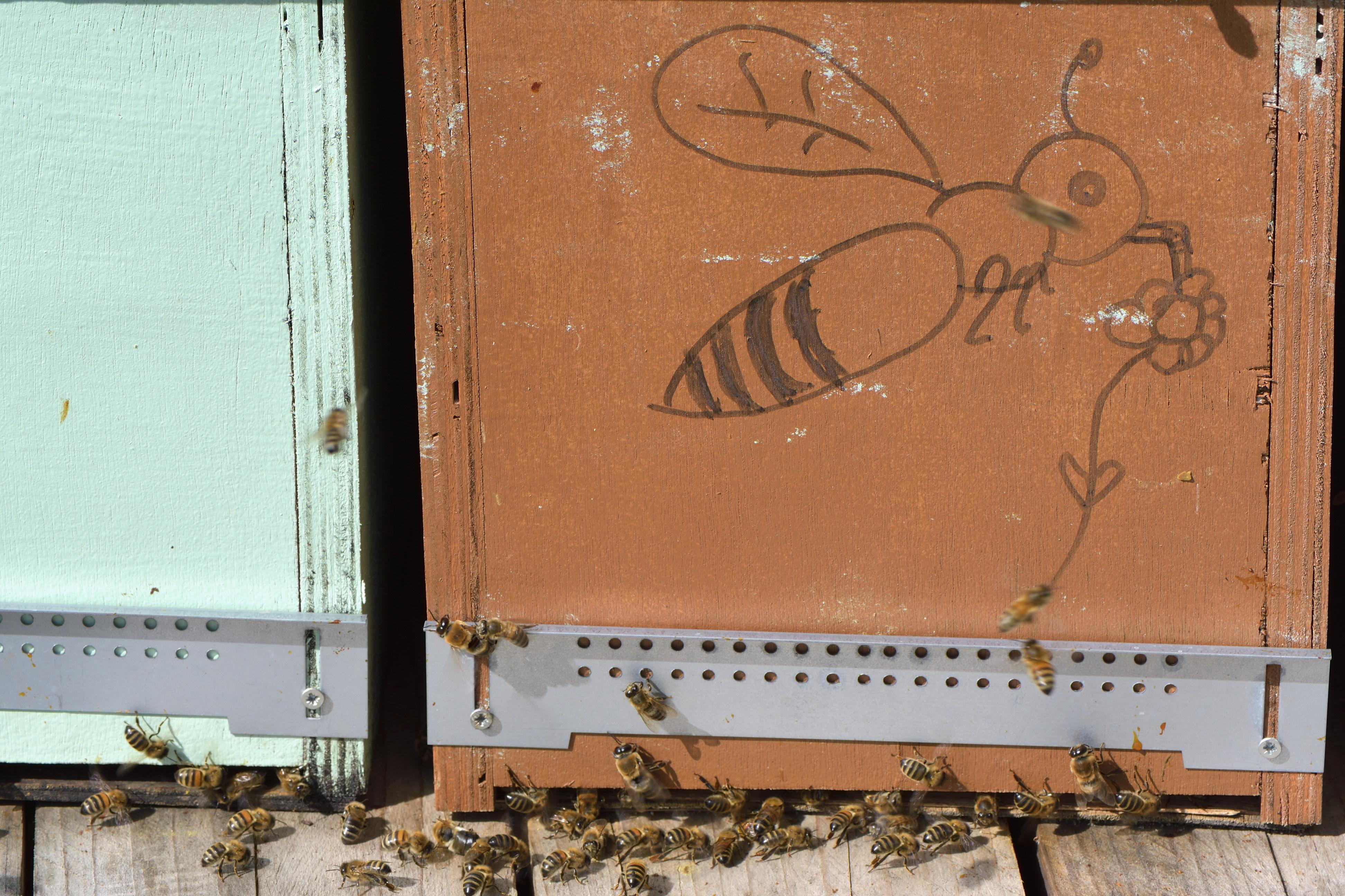 abeilles 41 vauvarin