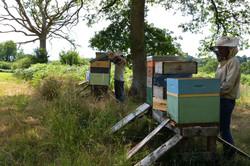 abeilles 16 vauvarin