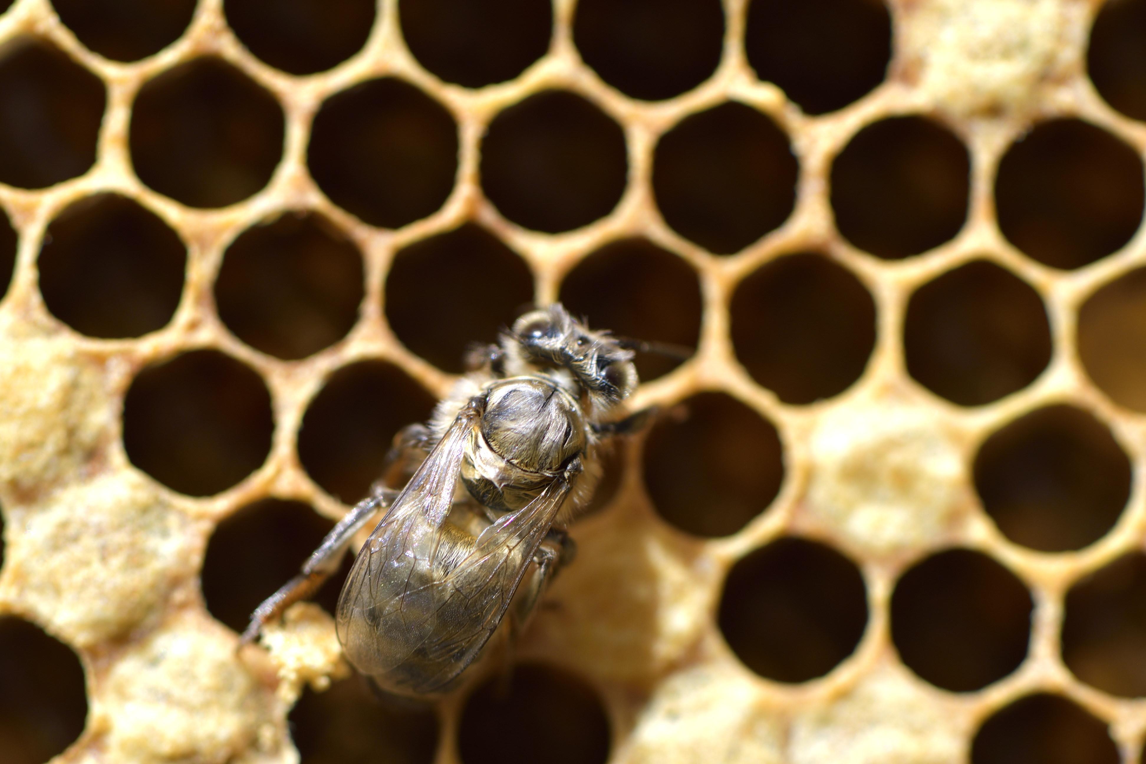 abeilles 2 vauvarin
