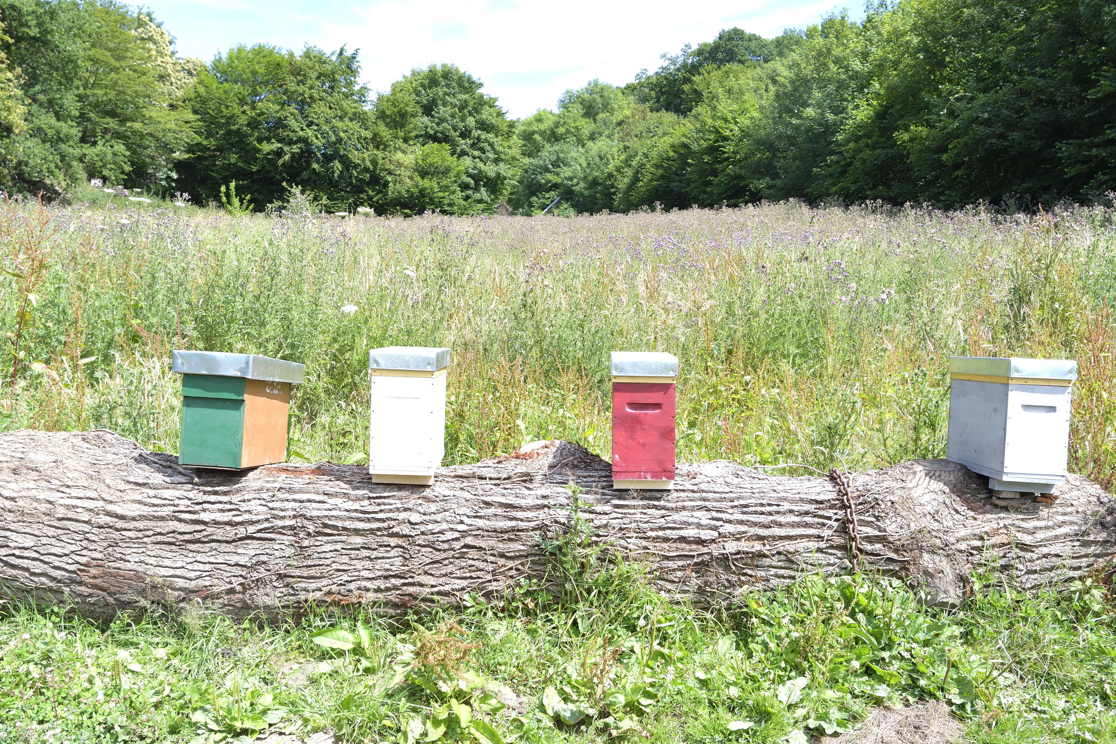 abeilles 14 vauvarin