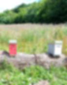 abeilles 14 vauvarin.jpg