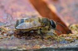 abeilles 24 vauvarin