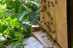 abeilles 1 vauvarin